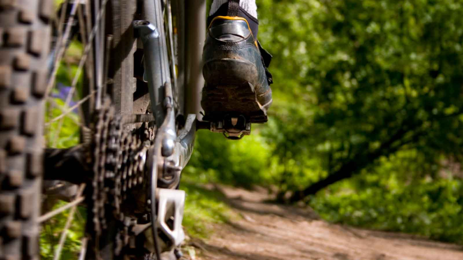 bike-bush2